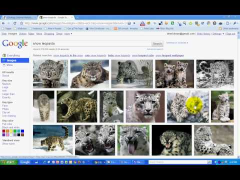 Screenshot: New Google Image Search Features